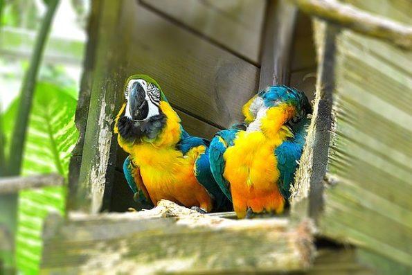 Guadeloupe-islands-zoo