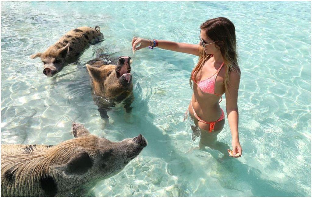 Les iles Exumas et Pig Beach